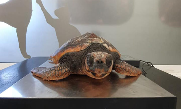 A turtley awesome rescue!